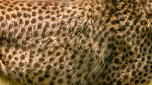 Fur Pattern