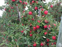 Weather Garden Tip Still Time To Prune Fruit Trees And Last Fruit Trees In Michigan