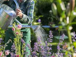 Older woman gardening to improve health