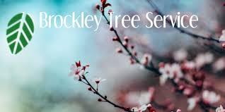 favourite flowering trees in ontario