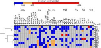 Antibiotic Resistance Genes Detected Heatmap Showing