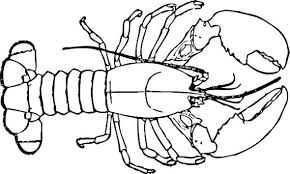 Small Picture Lobster Coloring Page chuckbuttcom