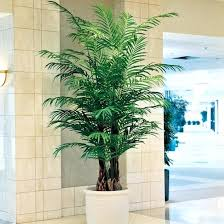 large outdoor artificial trees with lights techniques to install plants blog palm
