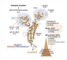 Scientists suspect Lambda SARS-CoV-2 ...