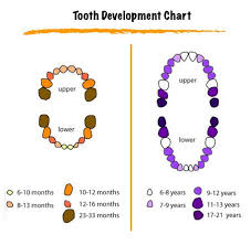 Kitten Teeth Chart Color Coded Tooth Eruption Chart Baby Teething Symptoms