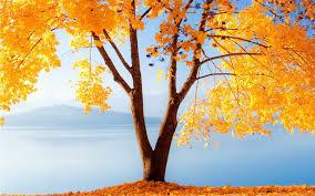 Fall Desktop Wallpaper #6788384