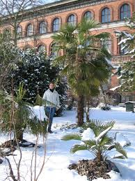 <b>Palms</b> for <b>Scandinavia</b>.
