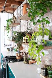 to hang plants from ceiling and walls