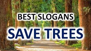 51 Best Slogans On Save Trees