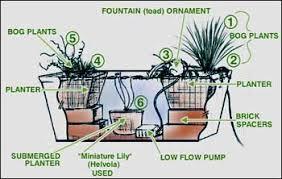 container water garden. Modren Garden Bog In Container Throughout Container Water Garden A