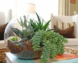 Small Picture 25 Indoor and Outdoor Succulent Gardens Of All Sizes Garden