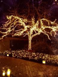 String Light Outdoor Christmas Tree Tree Lighting Outdoor Christmas Christmas Lights