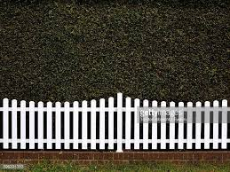 white picket fence. White Picket Fence Against Green Ivy Wall