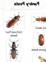 photo 5 of 8 wonderful bugs in cabinets pictures 5 kitchen cabinet bugs kitchen floor bugs kitchen