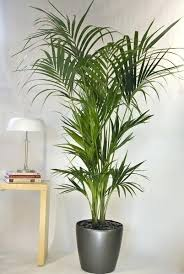 tall office plants. Plain Plants Tall Office Plants Palm From Interior Living Room For Sale  Fake  Artificial  On Tall Office Plants B