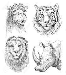Ensemble De Safari Animaux De T Te Noir Et Blanc Dessin De
