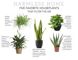 Air Purifying Plants For Bedroom Memsaheb Net