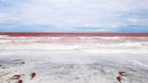 Red Tide That Plagued Florida for 15 ...