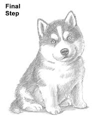 Small Picture How to Draw a Puppy Husky