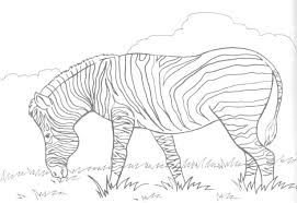 Small Picture Hard Coloring Pages Winter Animals Coloring Pages