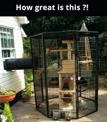 cat lady outdoor play area build an outdoor cat