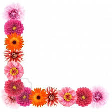 Flower Wall Paper Border Free Flower Page Border Download Free Clip Art Free Clip Art On