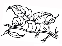Small Picture Free Printable Caterpillar Coloring Pages For Kids