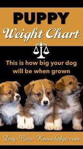 Doberman Weight Chart Doberman Pinscher Puppy Growth Chart 2019