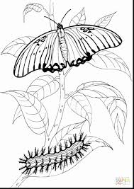 The Very Hungry Caterpillar Coloring Pages Awesome Free And Page