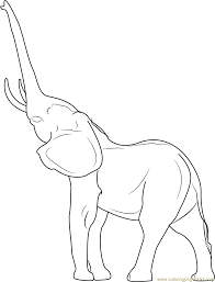 Small Picture Elephant Coloring Pages Printable Coloring Pages of Elephants