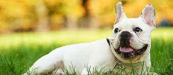 dog acne everything you need to know