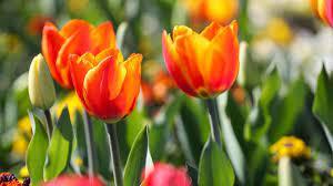 Gartenarbeit im April: Alles zu Aussaat, Pflanzungen, Düngen und  Rückschnitt