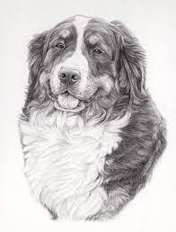 Potloodtekening Berner Sennen Hond Lissy Hondenportret In Grafiet