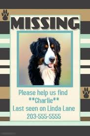 Lost Pet Poster Free Lost Pet Printable Poster Template Free Lost