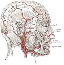 arteries of the face facial artery wikipedia