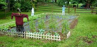 how to build a vegetable garden. Divide Your Garden Into Sections To Make Crop Rotation Easier. How Build A Vegetable E