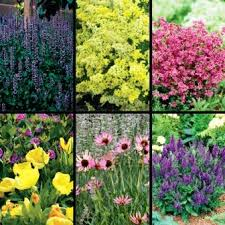Small Picture 45 best Perennials Minnesota hardy images on Pinterest Flower