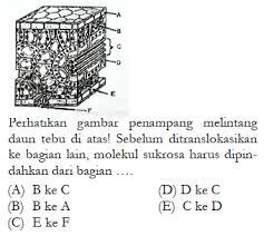 Makalah materi soal biologi kelas 12 sma/smk/ma diterangkan mulai dari sd, smp, atau sma, mts, ma dan smk lengkap dengan contoh soal pilihan ganda dan jawabannya. Contoh Soal Hots Biologi Sma Kelas 12