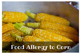 Food Allergy to Corn and Corn Ingredients - Allergy Authority