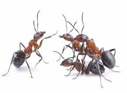 Lease Violations Pest Control Lease Considerations Code Violations Prevention