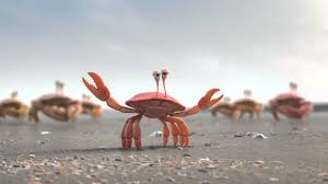 Crab Species Chart Types Of Crabs Learn All About The Different Crabs Species