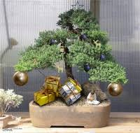 5 reasons a bonsai tree is the perfect gift