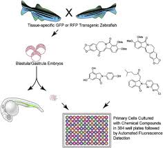 High Throughput Screening For Bioactive Molecules Using Primary Cell