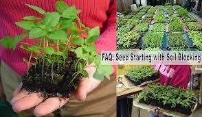 faq seed starting with soil blocking