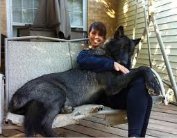 Wolf Vs Dog Size Chart These Dogs Are Huge No Really You Have To See These Dogs