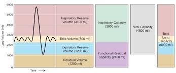 Normal Lung Volumes And Capacities Chart Lung Capacity Bioninja