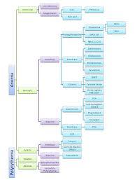 Hematology Flow Chart Hematology