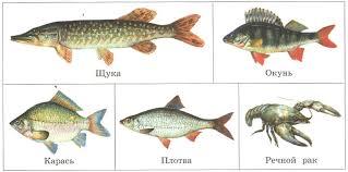 Экосистема озера Растения и животные Биология Реферат доклад  Озёрные едоки рыбы и раки щука окунь карась плотва речной рак