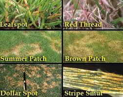 Lawn Disease Control Solutions