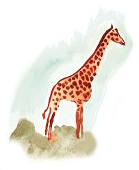 Image of: Koala The Discover Magazine Blogs Giraffe Archives Visual Science Visual Science
